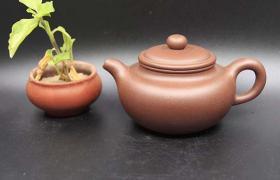 紫砂壶只能泡乌龙茶和普洱茶吗?