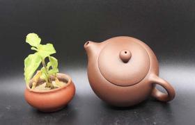 热门紫砂壶器型,壶友你手中有几款?