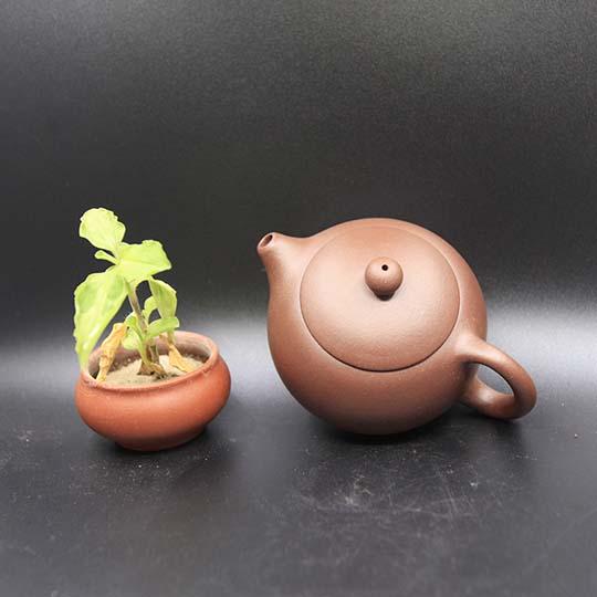 紫砂壶什么壶型最好用?  1